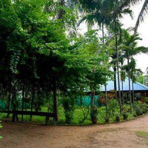 Mareena Panchakarma Back pain Clinic